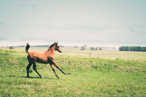 乾草地, 乾草田, 人種 的 免費圖庫相片