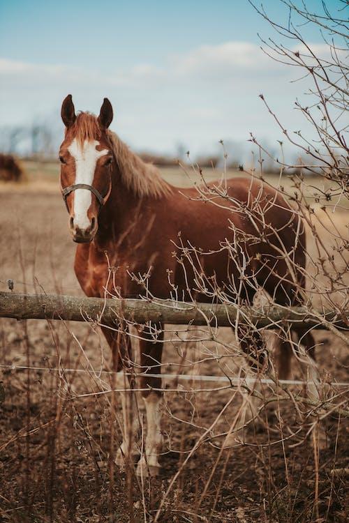 Brown Horse on Brown Grass Field