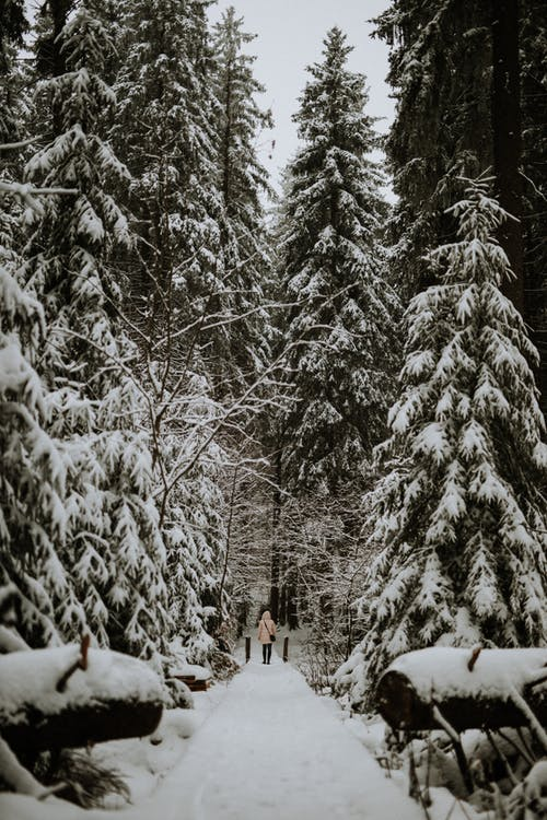People Walking on Snow Covered Ground Near Trees