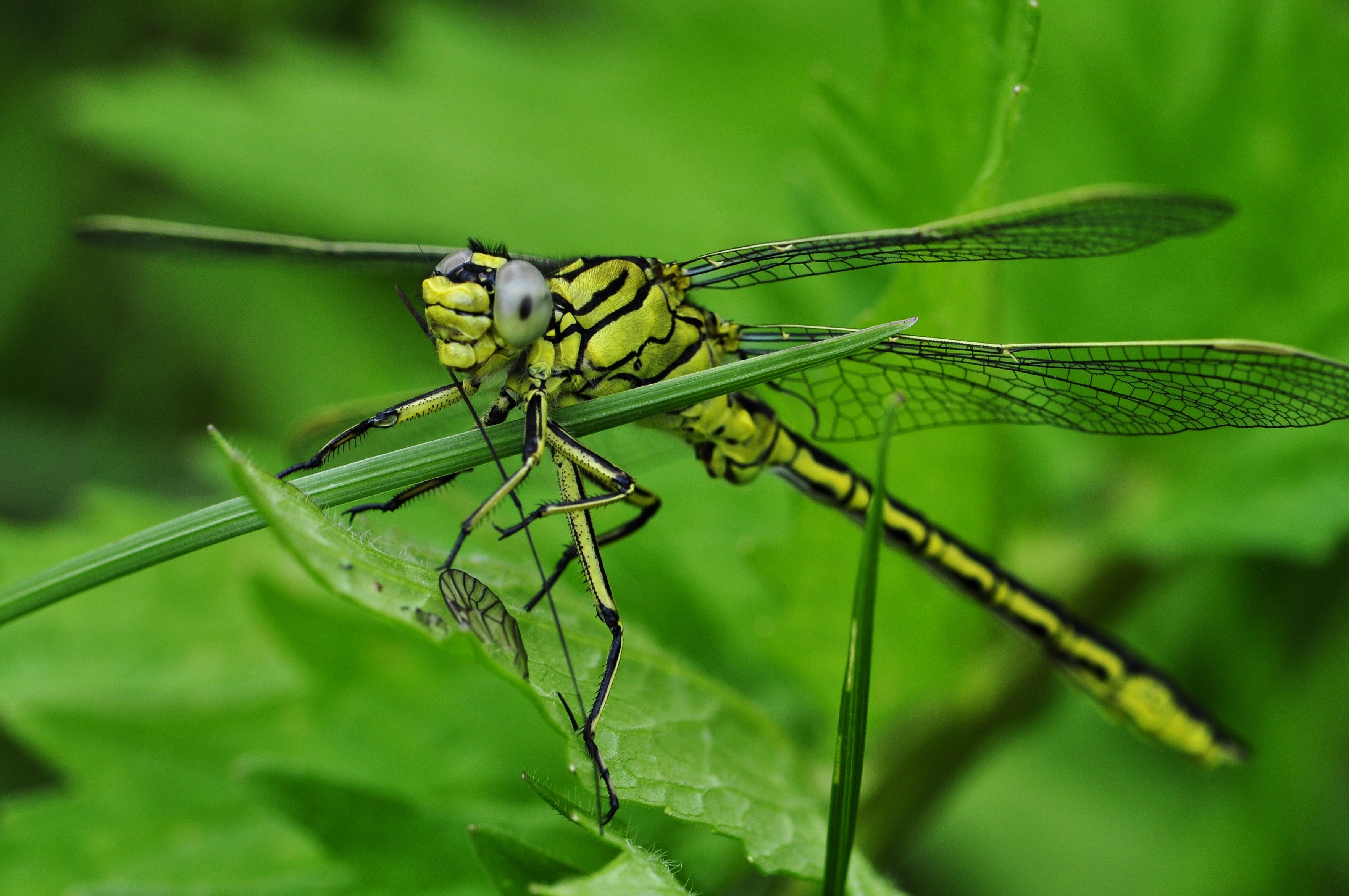 Green and Black Dragonfly on Green Leaf during Daytime