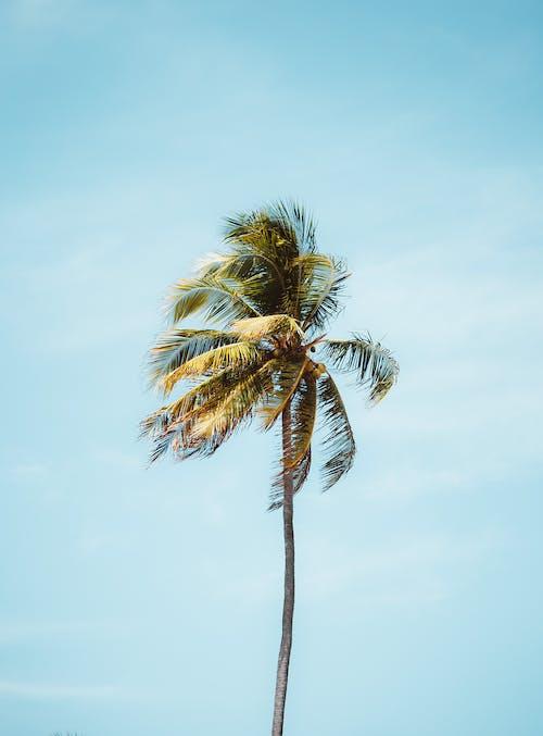 Photos gratuites de arbre, bord de mer, côte