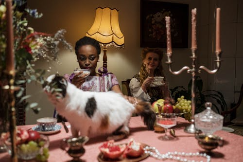 Friends Having a Tea Party with Their Pet Cat