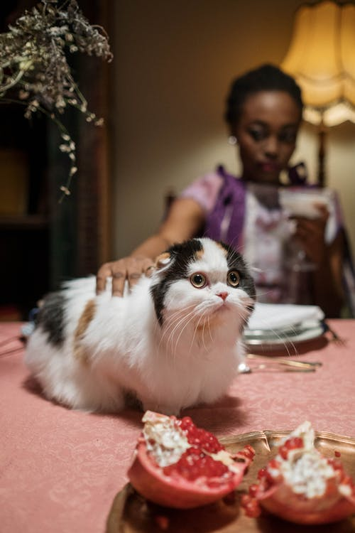 White and Black Cat on Table