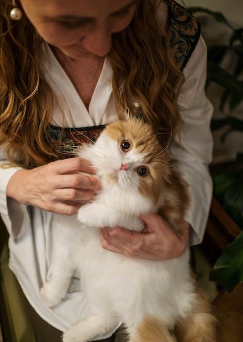 Foto d'estoc gratuïta de adorable, amant de les mascotes, amant del gat