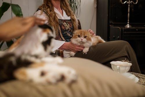 Orange Cat on Woman's Lap