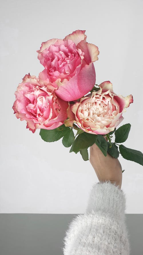 Crop anonymous female florist demonstrating pink English roses with green leaves for floral composition