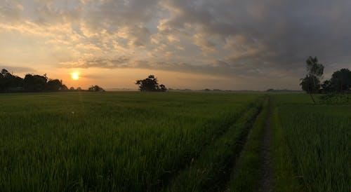 Free stock photo of panorama, sunrise