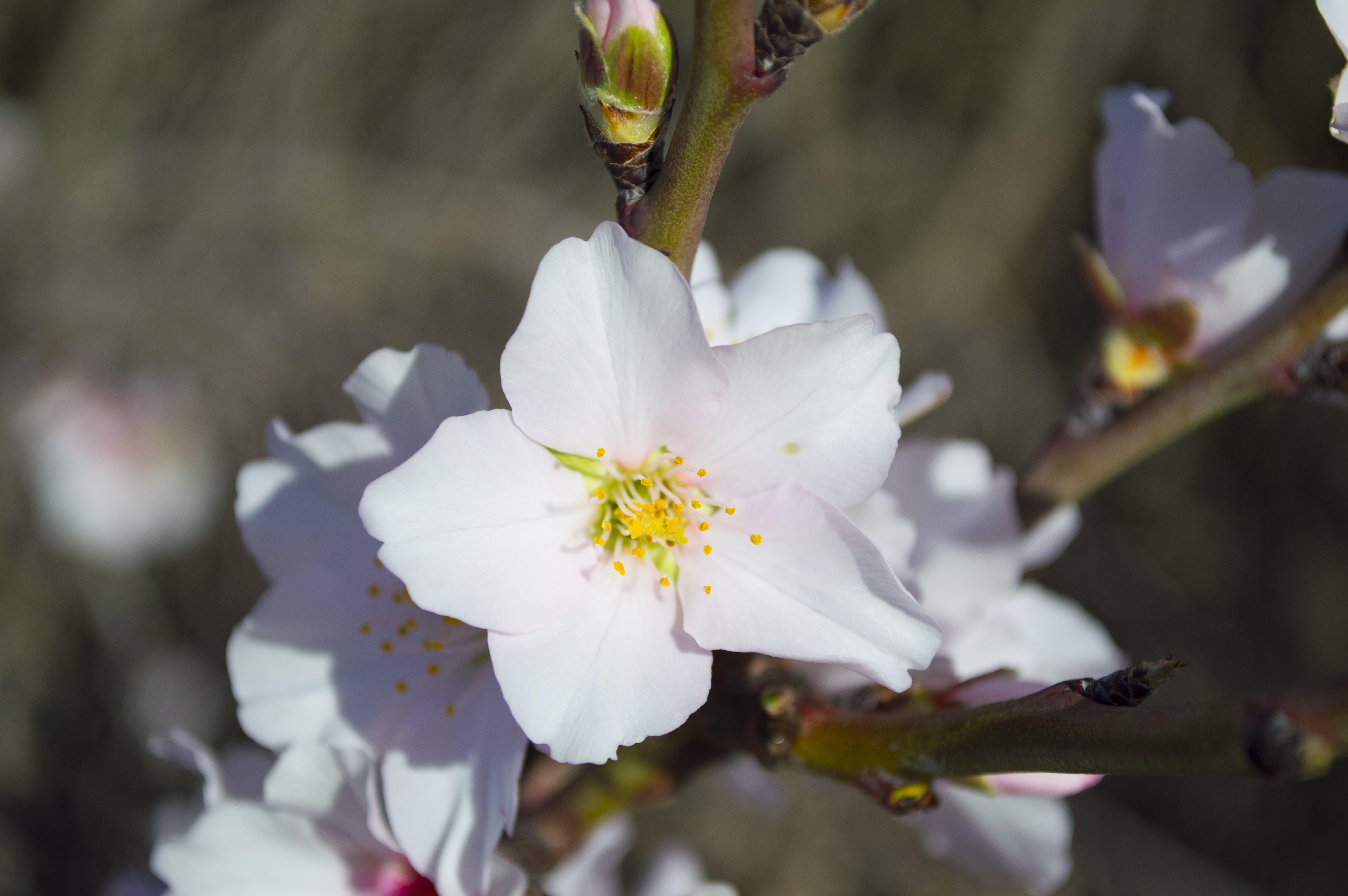 White 5 Petaled Flower during Daytime