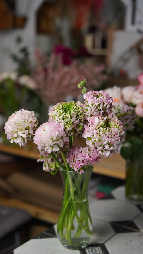 Bunch of blooming fragrant green and pink peonies with large inflorescences in glass vase on table in flower shop