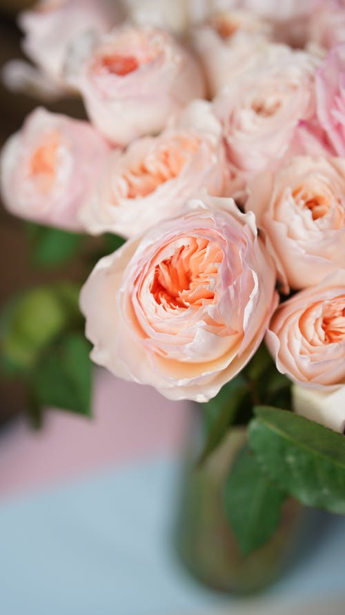 High angle of bunch of fresh roses with lush buds in vase on table