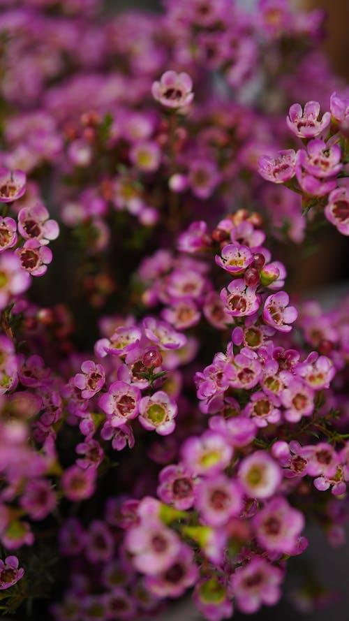 Kostnadsfri bild av arom, aromatisk, blomma