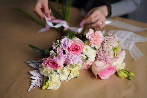 국화, 근로자, 꽃의 무료 스톡 사진