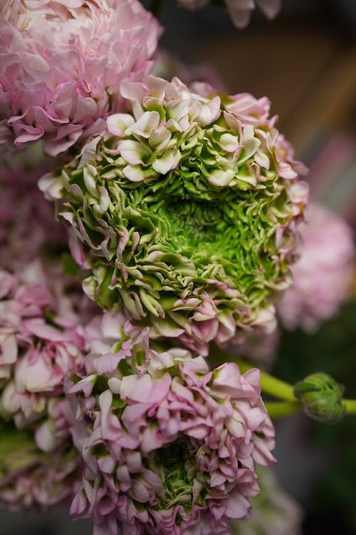 Bunch of fresh hydrangea in flower shop