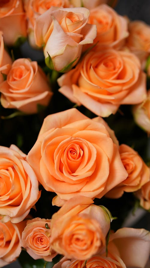 From above of bouquet of blooming roses with gentle petals for romantic occasion