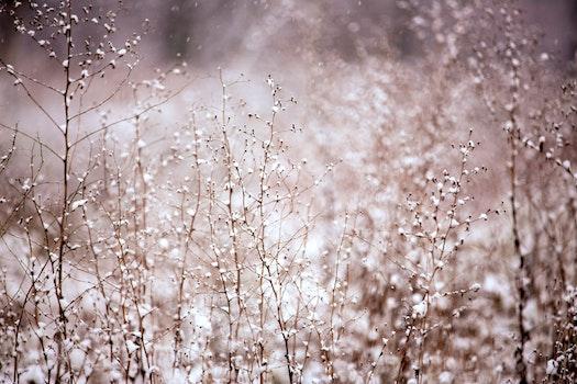 Free stock photo of cold, snow, nature, bush