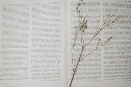 テキスト, ブックマーク, フラワーズの無料の写真素材