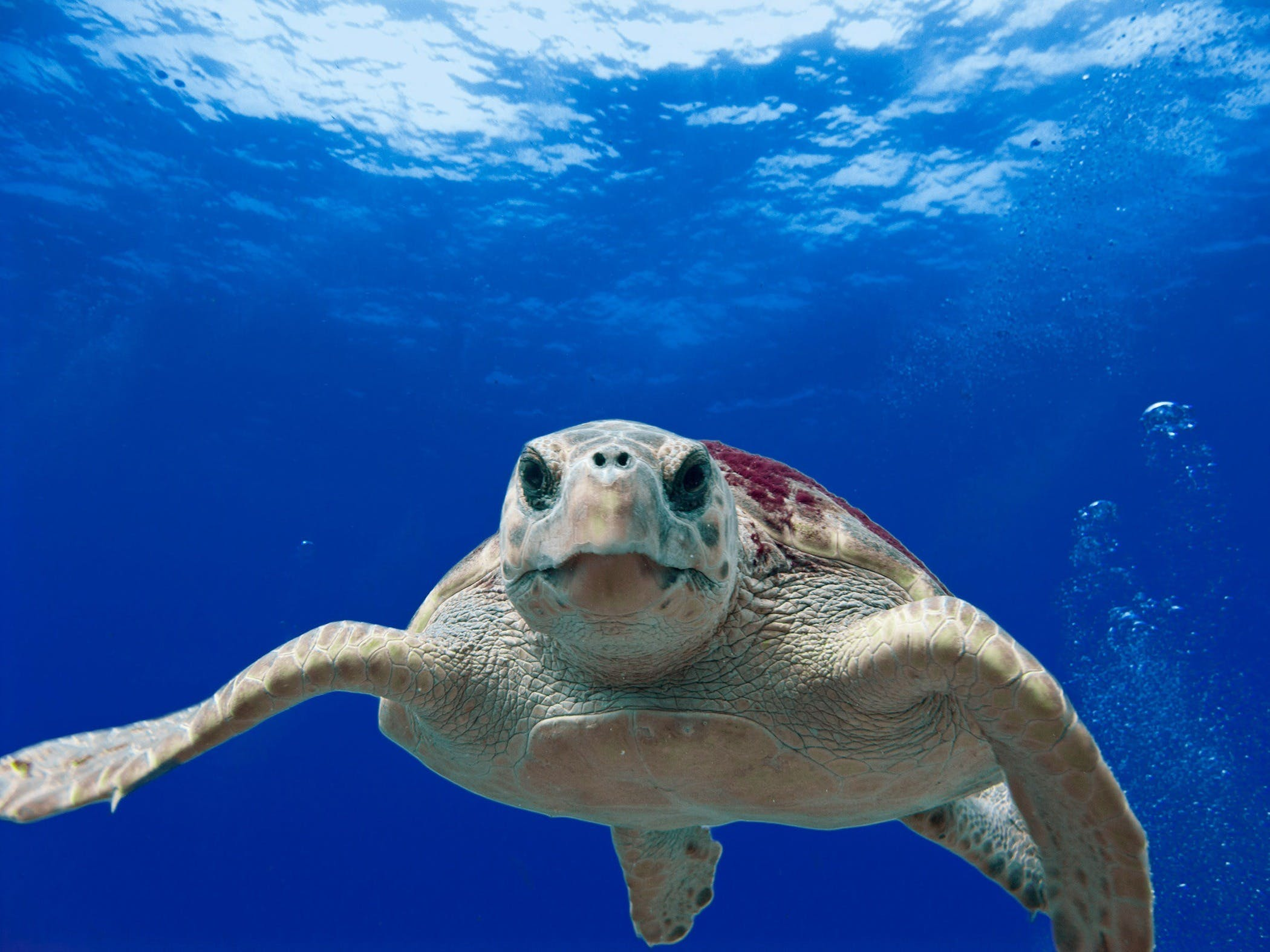Gray and Green Turtle Swimming on Water