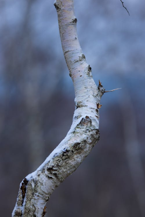 Brown and Black Insect on Brown Tree Branch