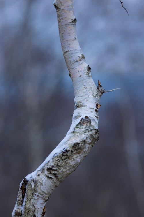 Foto profissional grátis de animais selvagens, ao ar livre, árvore