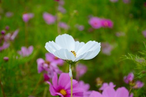 Základová fotografie zdarma na téma barvy, bílá, bílá květina, flóra