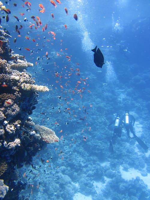 Бесплатное стоковое фото с вода, глубокий, дайверы, животные