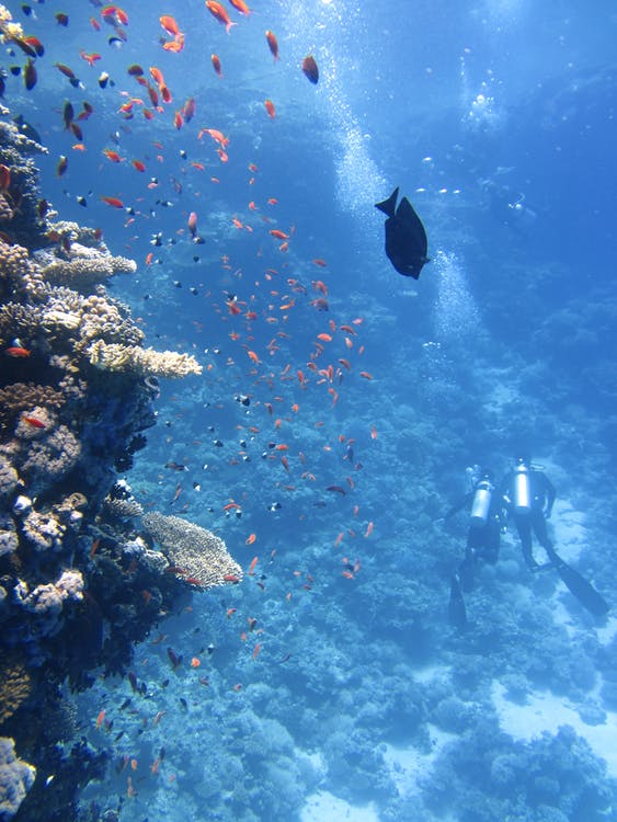djup, djur, dykare