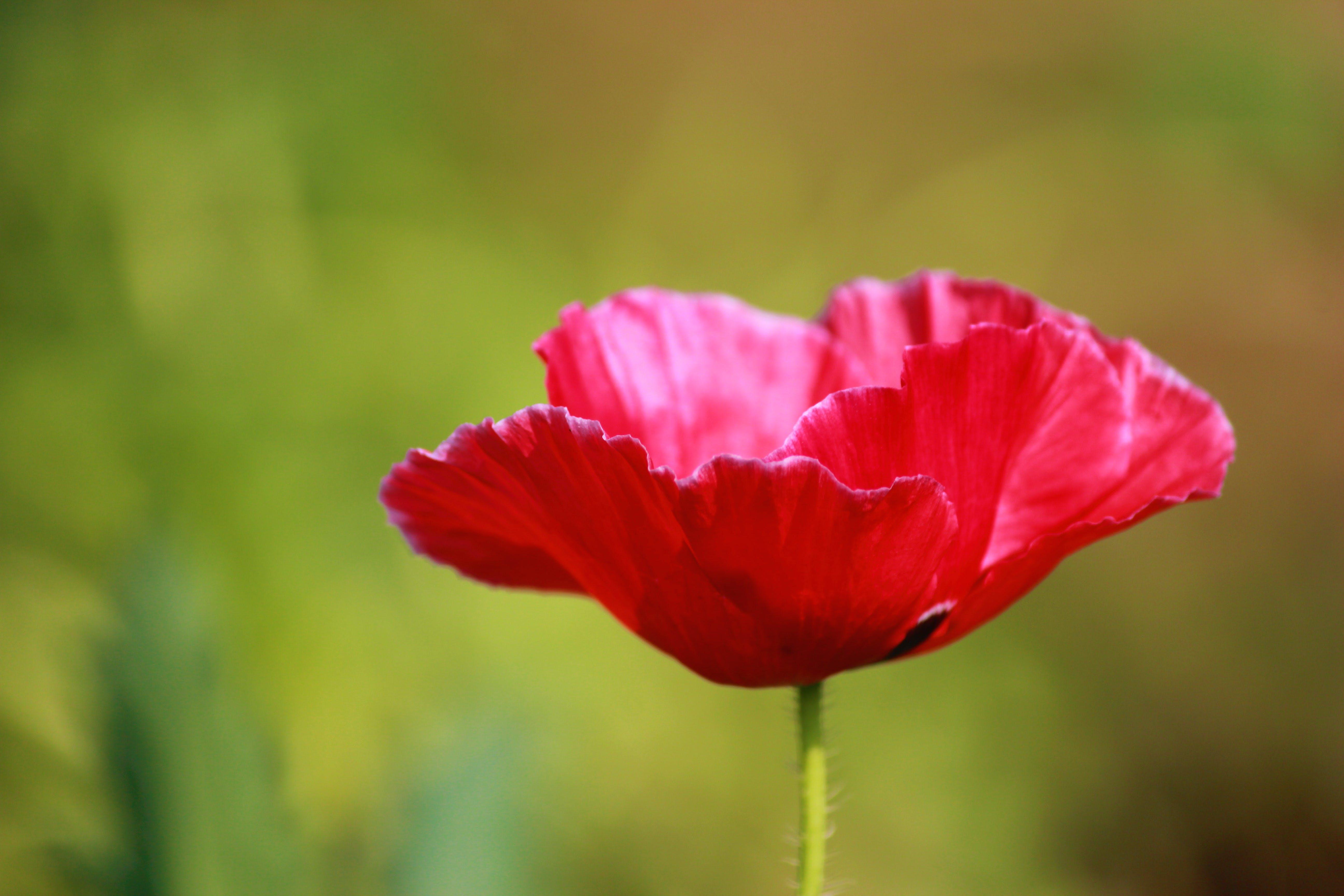 bitki, bitki örtüsü, bulanık arka plan, büyüme içeren Ücretsiz stok fotoğraf
