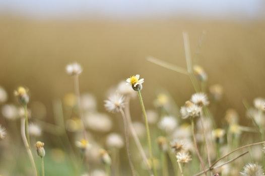 Kostenloses Stock Foto zu landschaft, natur, blumen, wiese