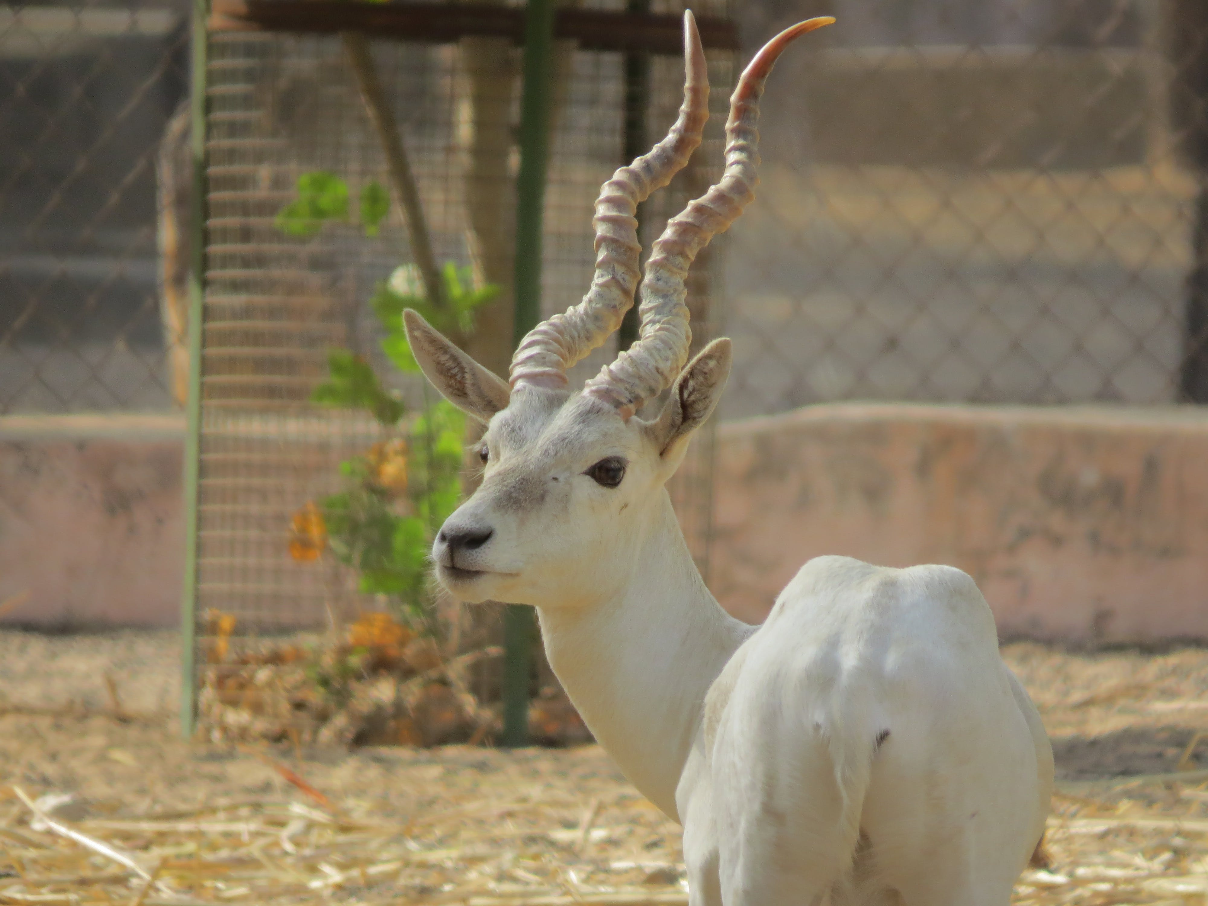Free stock photo of animal