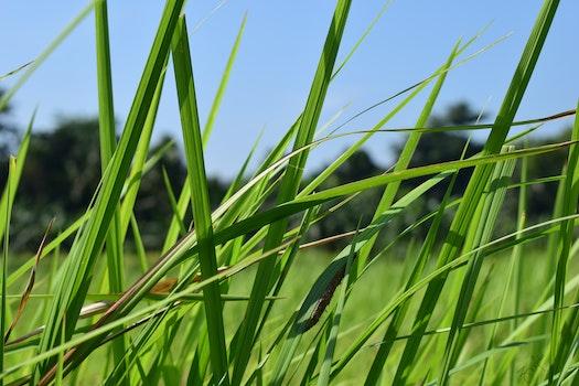 Free stock photo of field, grass, green, wallpaper