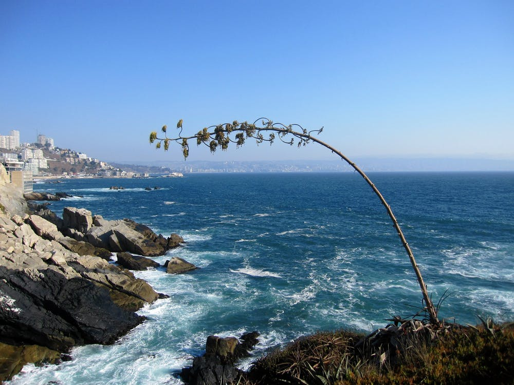 Free stock photo of chile, coast, sea