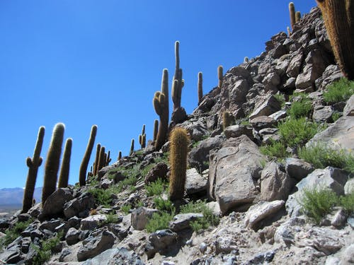 Free stock photo of cacti, chile, southamerica