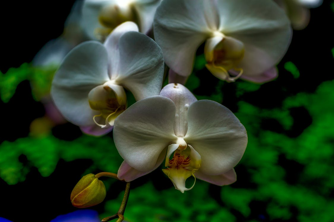 beautiful flowers, gardens, orchids