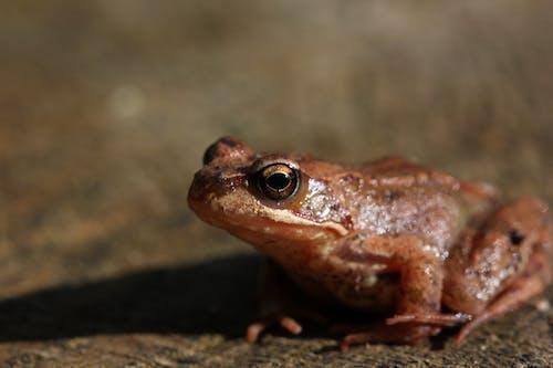 Close Up Shot of a Frog