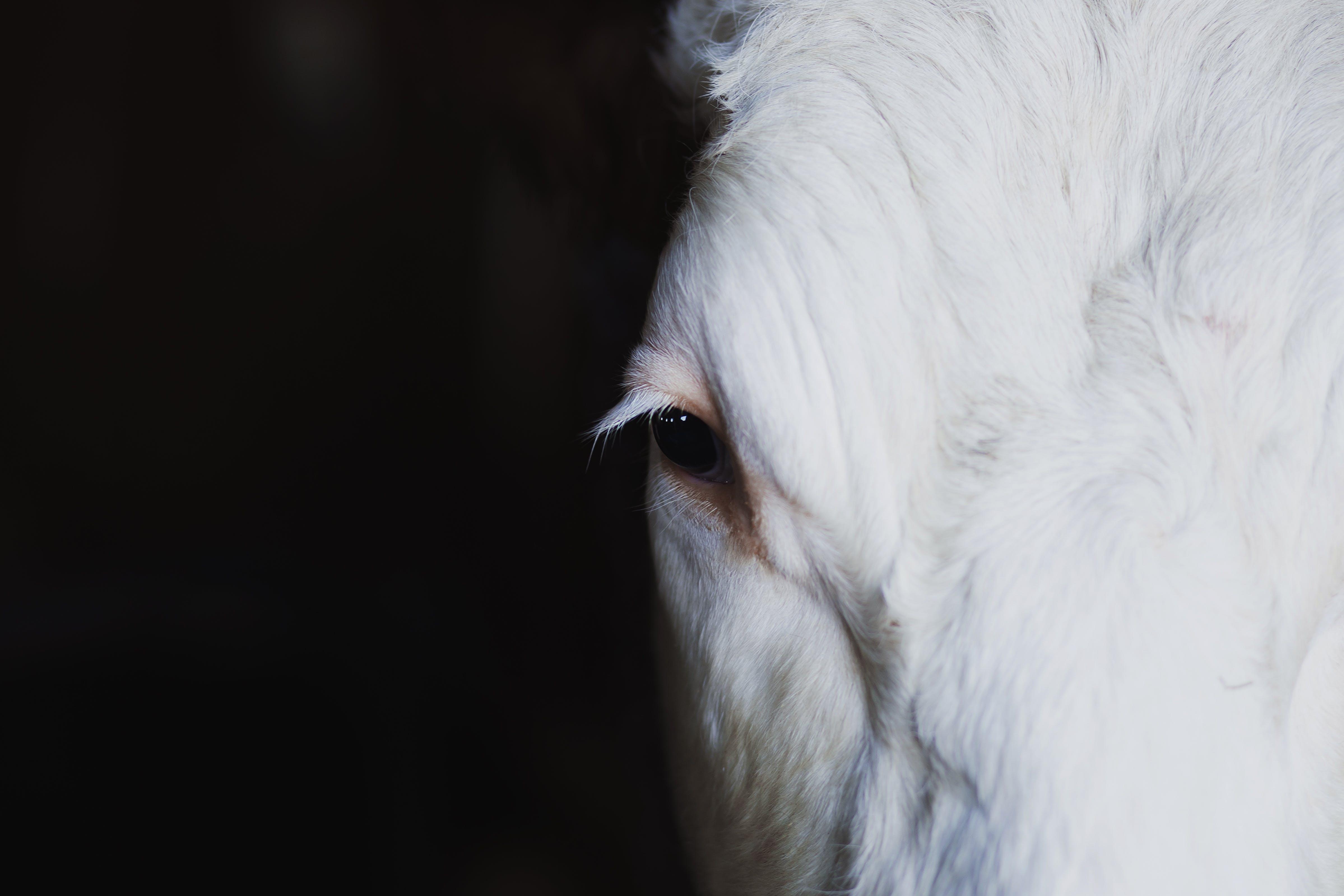 動物, 哺乳動物, 白馬, 馬 的 免费素材照片