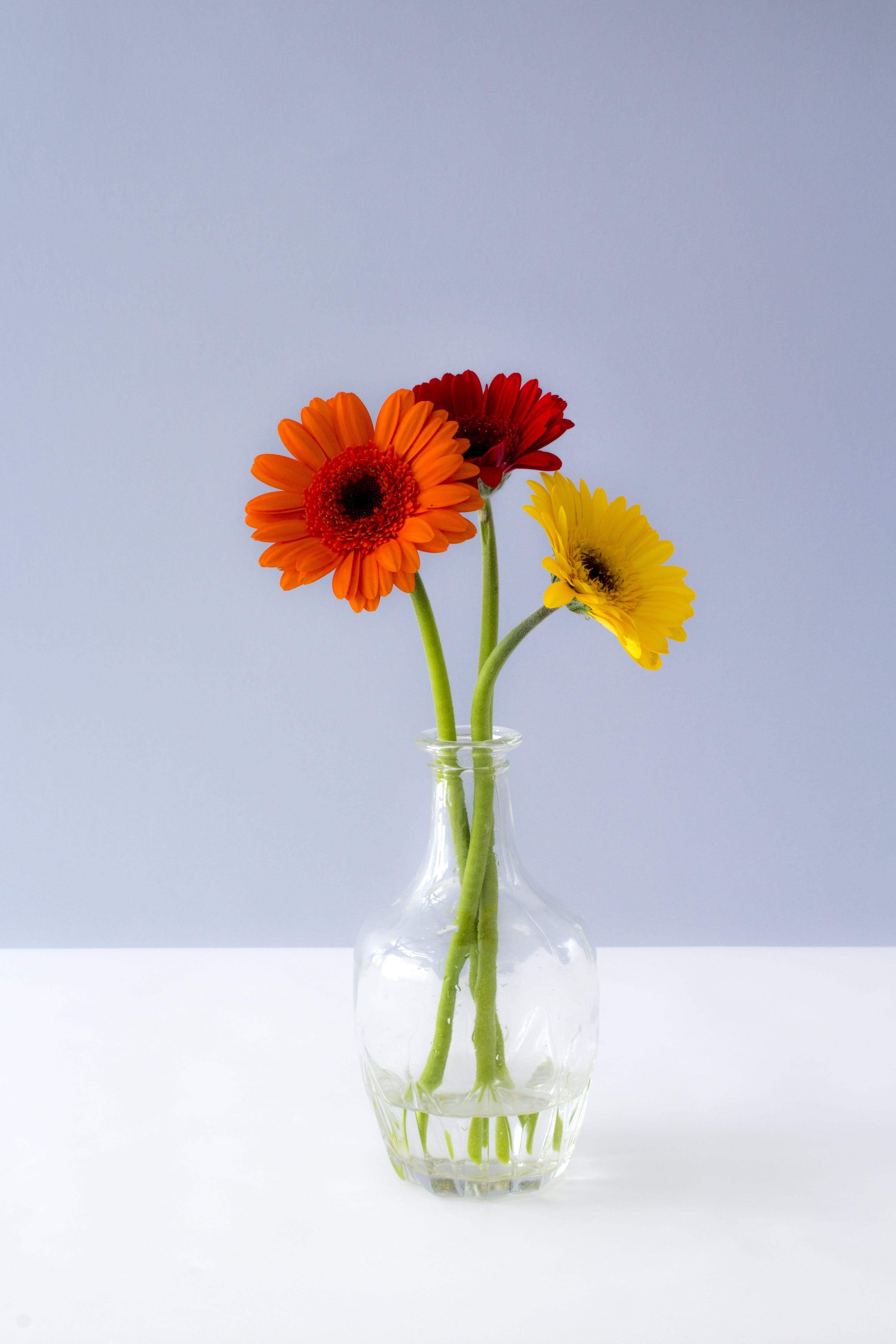 Kostenloses Stock Foto zu rot, blumen, gelb, orange
