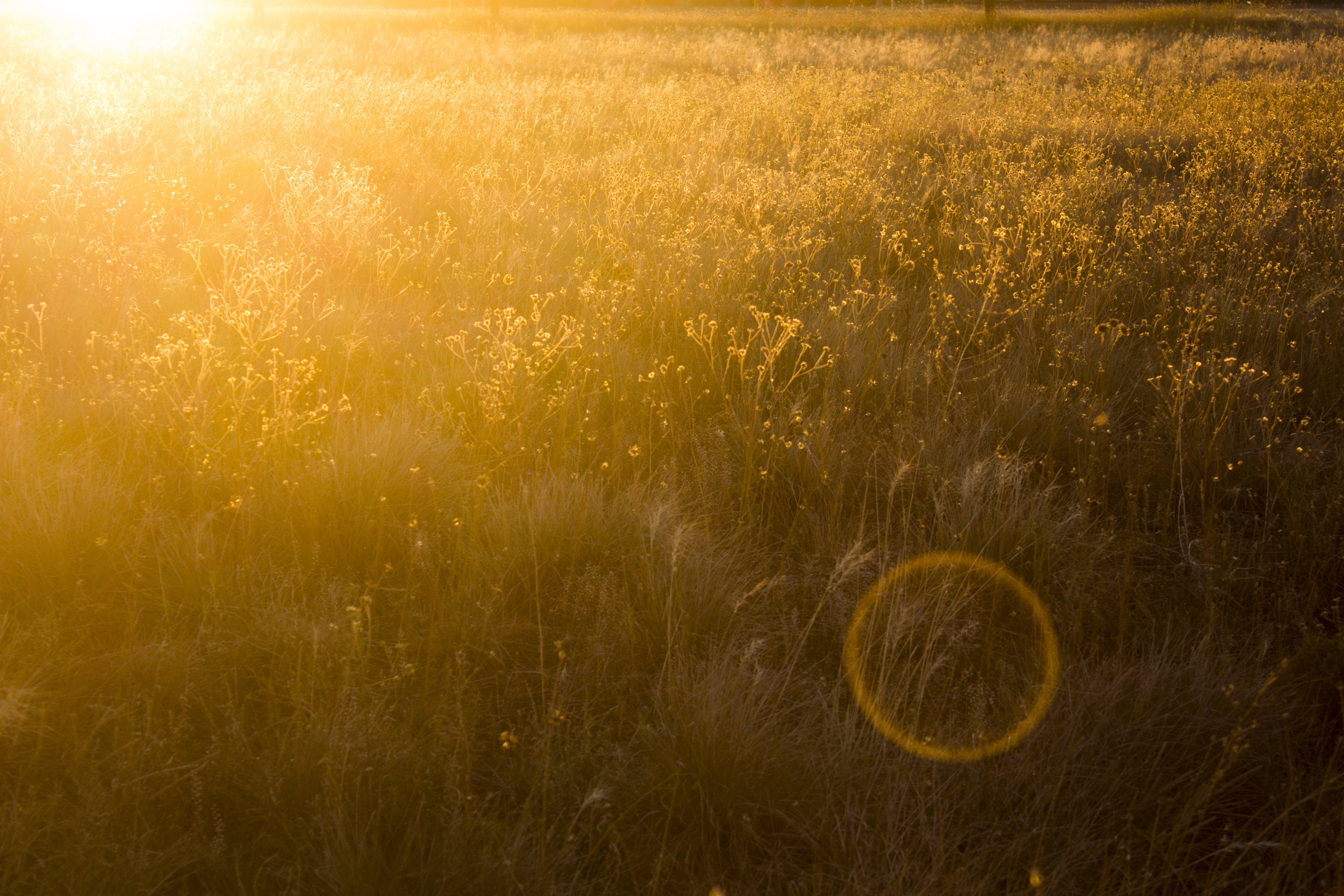 Безкоштовне стокове фото на тему «візерунок, жовтий, заводи, Захід сонця»