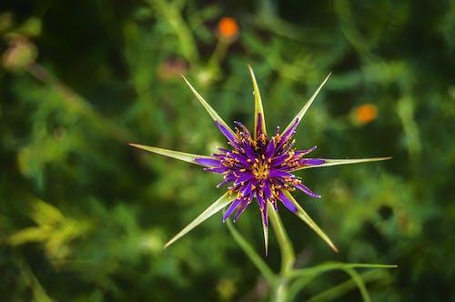 Gratis stockfoto met bloeiend, bloem, bloemblaadjes, blurry achtergrond