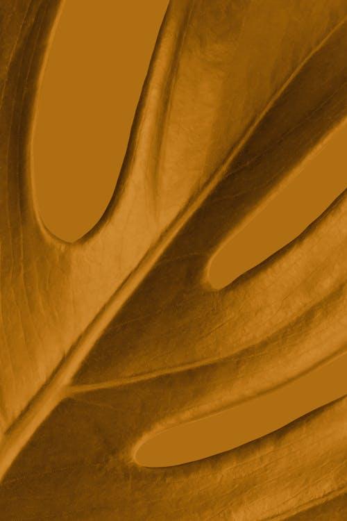 Foto stok gratis alam, bingkai penuh, bukit pasir
