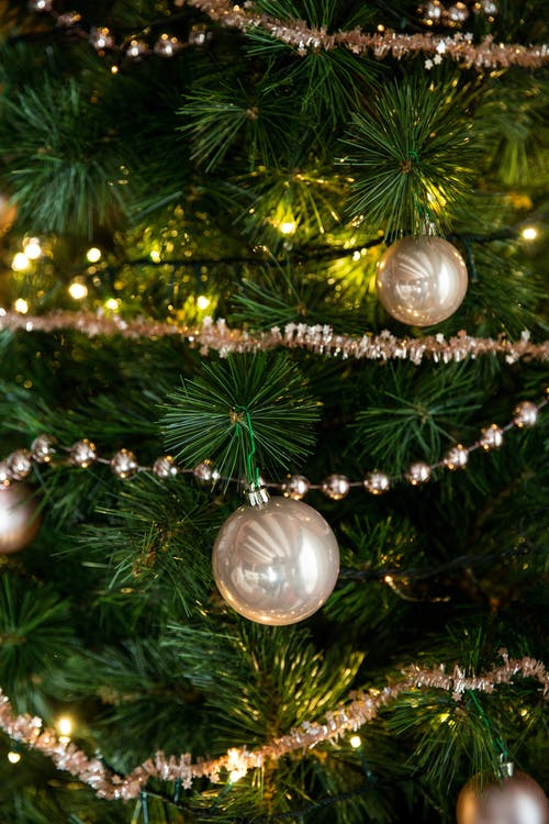 Free stock photo of backgrounds, branch, celebration, christmas
