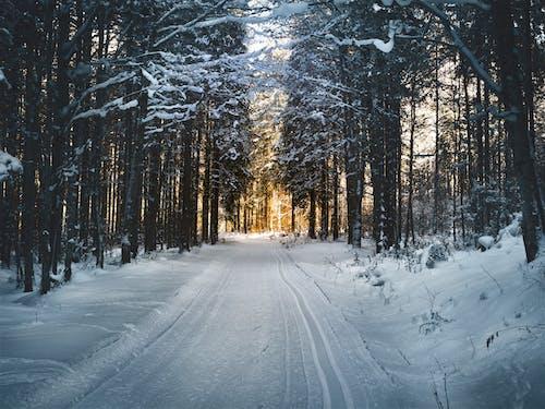 Fotos de stock gratuitas de arboles, bosque, camino forestal, camino sin asfaltar