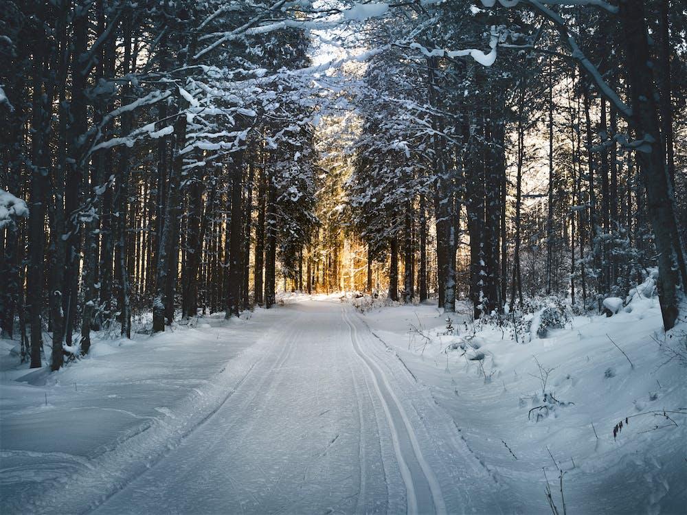 コールド, パーク, 冬