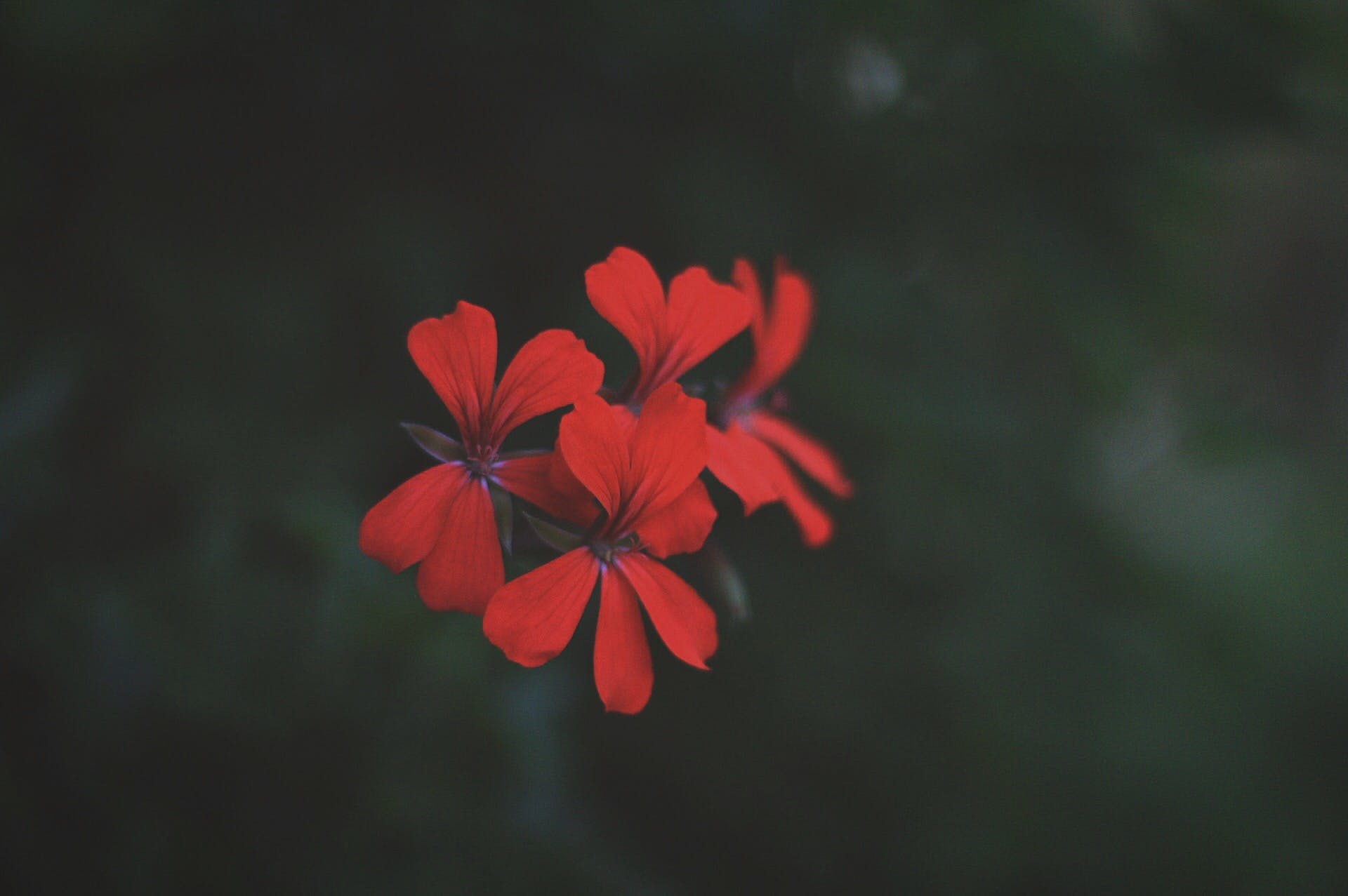 Free stock photo of flower, forest, leaves, nature