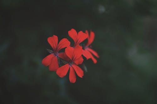 Gratis arkivbilde med blomst, natur, rød, skog
