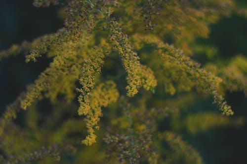 Gratis arkivbilde med blomst, eng, gul, natur