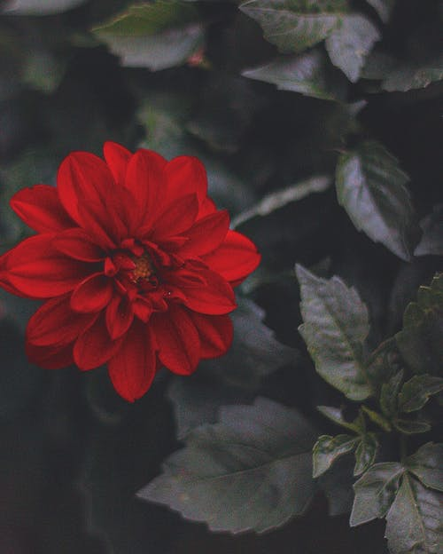 Free stock photo of flower, forest, nature, red