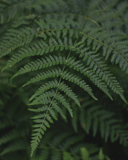 Free stock photo of forest, green, nature