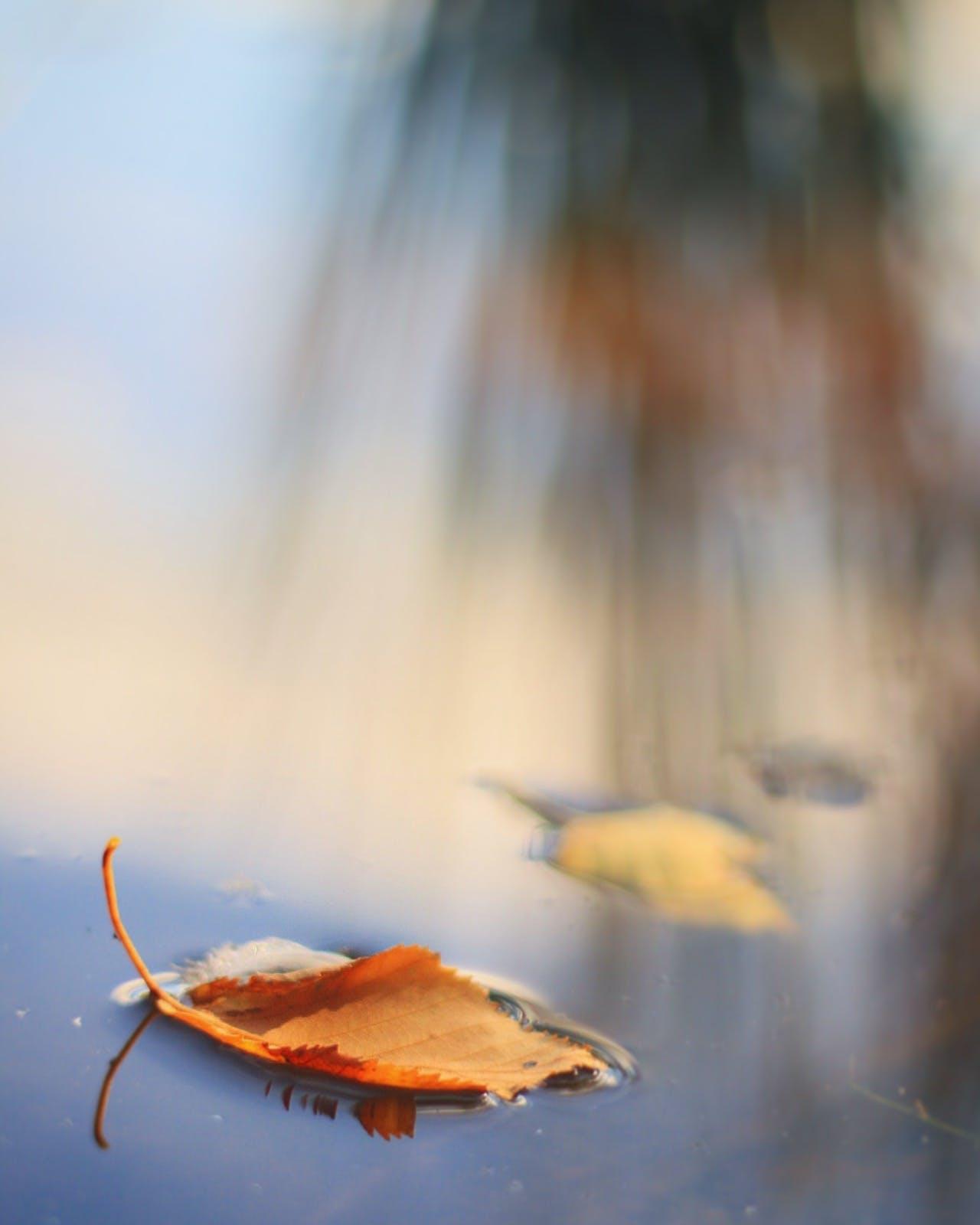 Free stock photo of water, yellow, lake, leaves