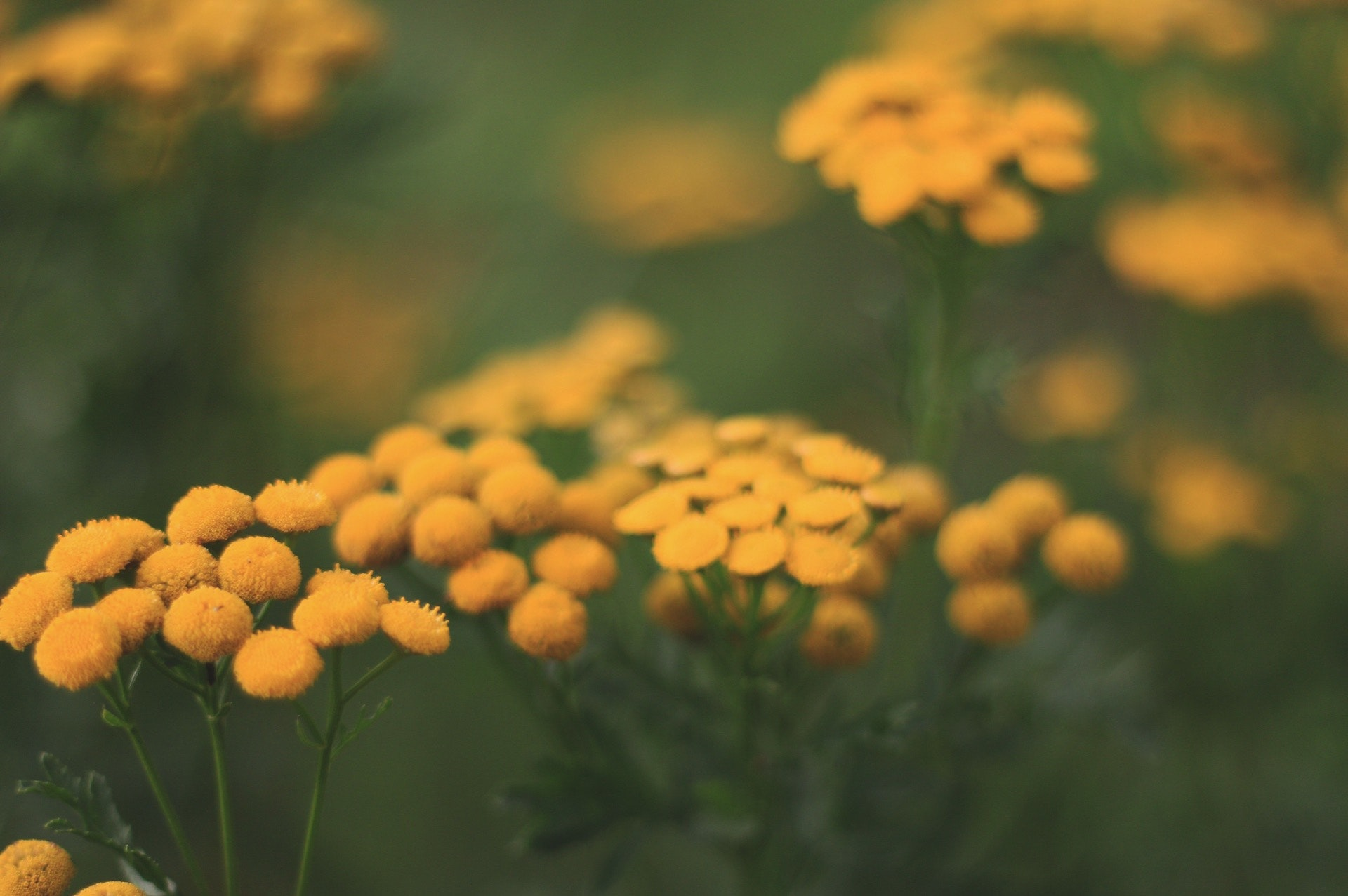 Selective Focus Photography Of Yellow Petaled Flower: Selective-focus Photography Of Yellow Flowers · Free Stock