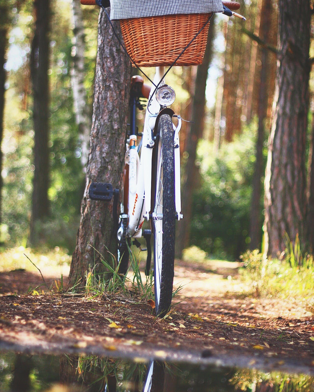White Beach Cruiser Bicycle Parked Beside Brown Tree
